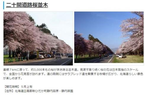 2015年桜開花予想
