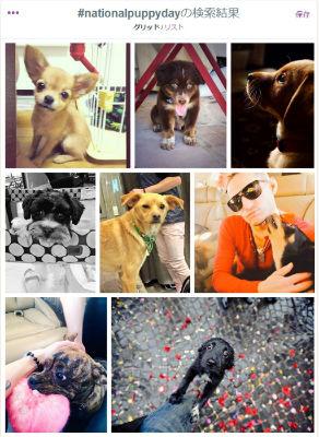 ah_puppy2.jpg