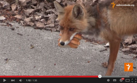ah_fox03.jpg