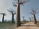 バオバブが林立する道を行ったり来たり Googleストリートビューにマダガスカルの自然