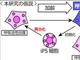 「細胞の初期化」で若返りの可能性 筑波大学、ヒトの老化の仕組みの新仮説を発表