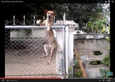 ah_fence2.jpg