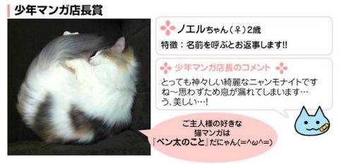 haru_nyanmo03.jpg