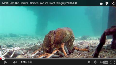 ah_crab1.jpg