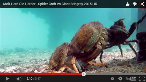 ah_crab3.jpg