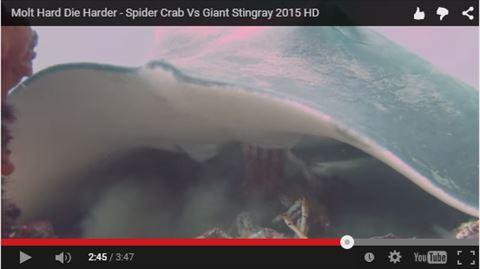 ah_crab4.jpg