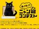 箱に入ったネコの写真を投稿するヤマト運輸のキャンペーン、にゃんこたちの猛烈なかわいさを引き出す