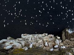イギリスの野生生物写真コンテスト受賞作品が圧巻 自然の神秘、動物のしなやかな生きざまにうっとり