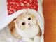 猫さんもお布団で寝る時代 フェリシモから「猫のお布団」登場