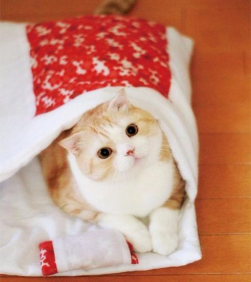 猫のお布団