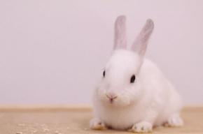 ウサギ48時間