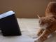 にゃんともうっとり! 「猫向けの音楽アルバム」を作るクラウドファンディング登場
