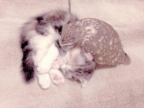 フクロウと子猫