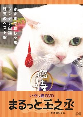 猫侍いやし猫DVD
