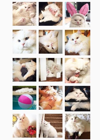 ねこ©bbspink.comYouTube動画>15本 ->画像>1300枚