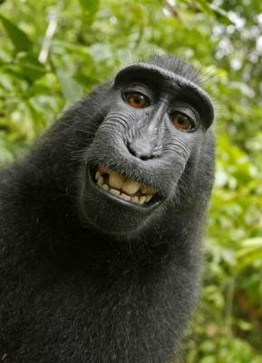 サルの自撮り