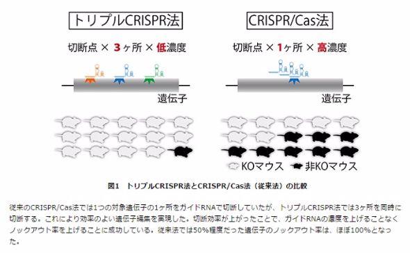 睡眠遺伝子「Nr3a」