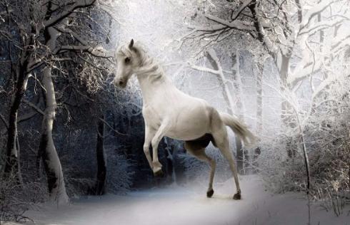白馬を白馬に