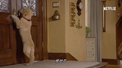 20年ぶりに帰ってくる家族たちを待ちわびるこの犬は!!コメットの末裔?