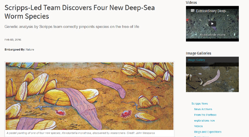 ナゾの深海生物