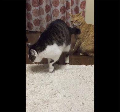 尻尾を食らうニャ!