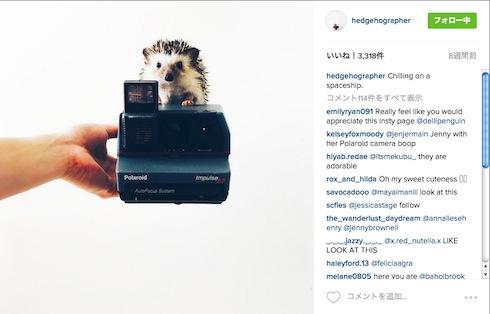 カメラの上のハリネズミ