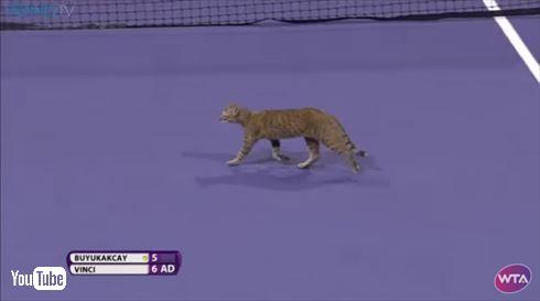 テニスネコ乱入