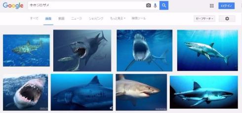 ホホジロザメの画像 p1_3