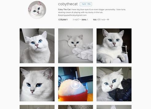 青い瞳のネコ
