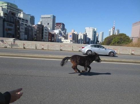 湯島聖堂近くの道路を疾走する馬
