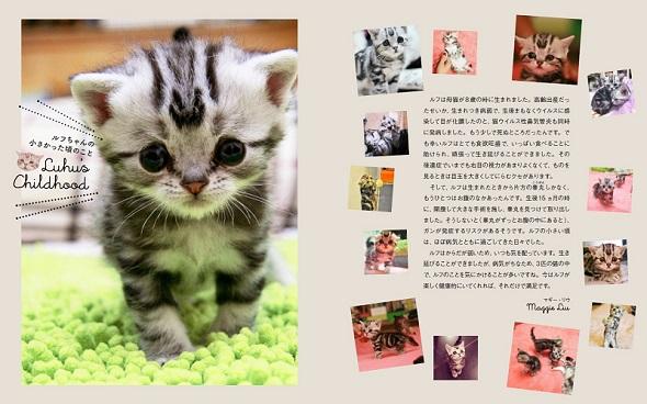 世界一さびしそうな顔の猫