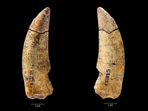 新種の化石