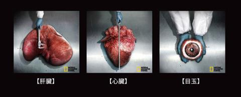 リアルな内臓標本