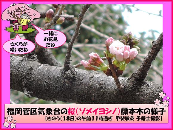 ah_sakura.jpg