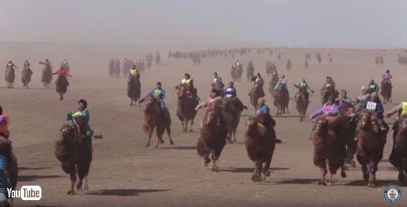 モンゴルのラクダレース