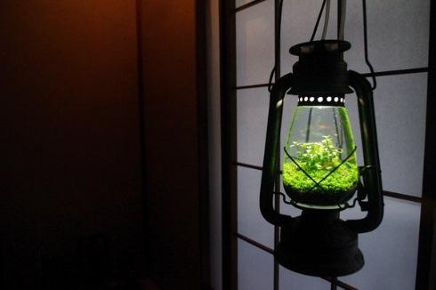 ランプ水槽1