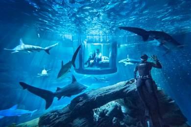 サメに囲まれた水中の部屋