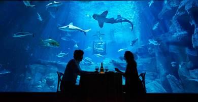 サメを眺めながらディナー