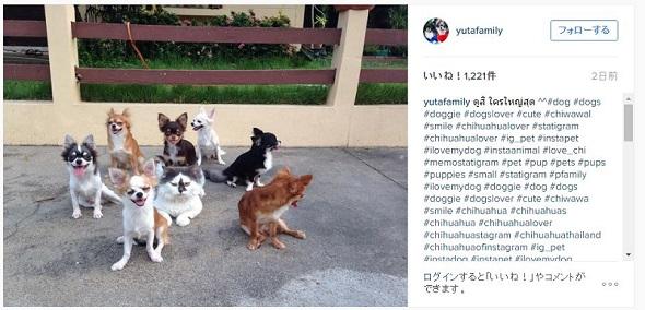 ネコとチワワの大家族