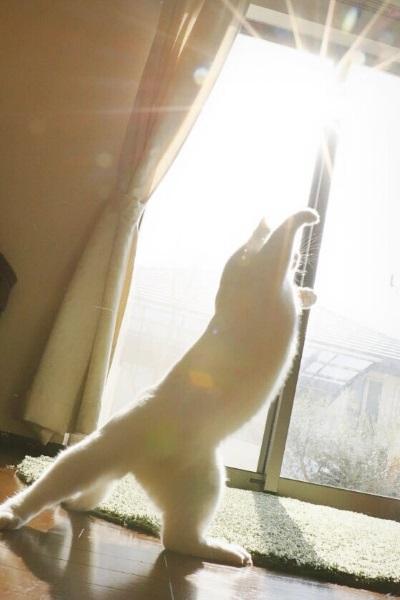 ファイナル猫ニャイニング