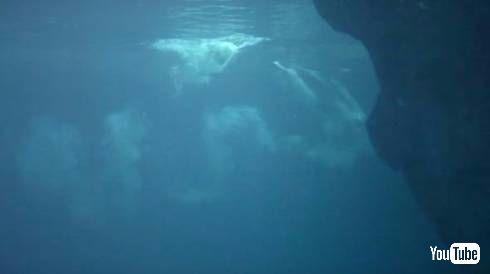 イルカ出産
