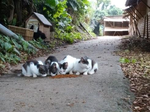 鶏舎に産み落とされた仔猫