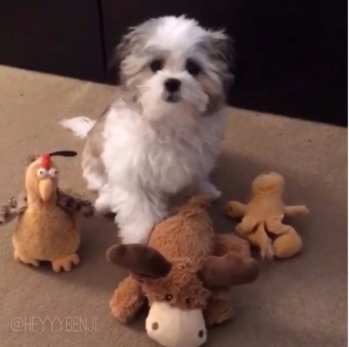 一番の親友を選ぶ犬