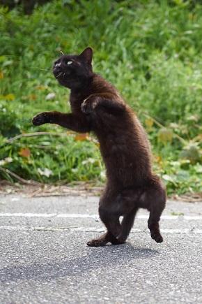 マヌケなポーズの黒猫