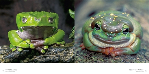 世界のキレイでかわいいカエル