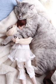 猫ドール1