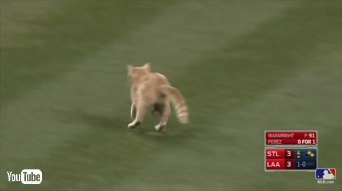 MLBネコ乱入