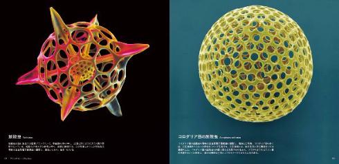 美しい顕微鏡写真が発売