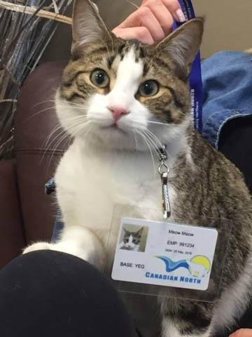 Meow Meowちゃん
