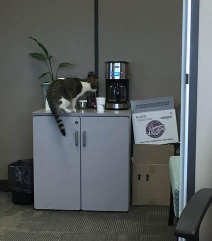 コーヒーとMeow Meowちゃん